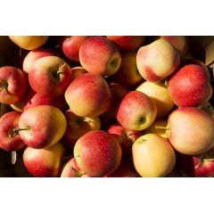 Яблоки Гала, ящик 13 кг