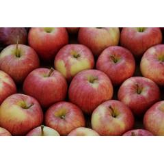 Яблоки Джонагоред, ящик 13 кг